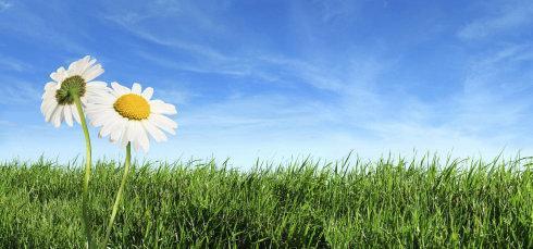 春季养生食疗原则_春季食疗养生菜谱推荐